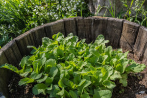 Un jardin partagé à Moûtiers !